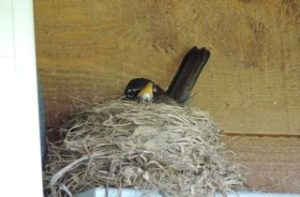 Momma robin sitting tight