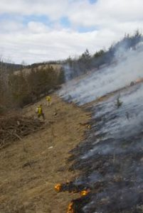 Fire to open up prairie vistas